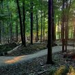 REMINDER:  East Rim Trail Day this Sunday, Oct 2nd!